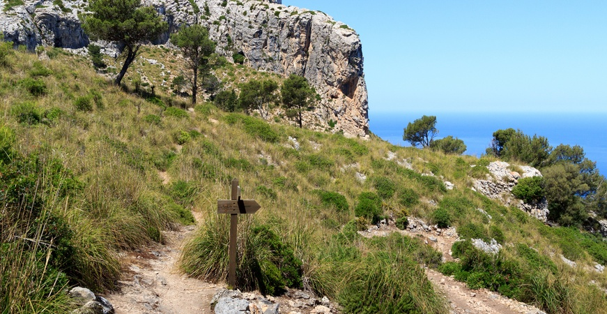 Image for ENJOY THE BEST EXCURSIONS IN POLLENSA